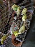 Vogelkooi Stock Afbeelding