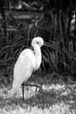 Vogelkunde- und Freiheitskonzept lizenzfreies stockbild