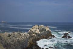 Vogelleben auf der Pazifikküste von Chile Stockbild