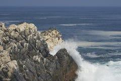 Vogelleben auf der Pazifikküste von Chile Stockfoto