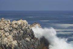Vogelleben auf der Pazifikküste von Chile Stockfotos