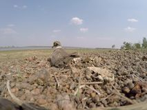 Vogelluke stock footage