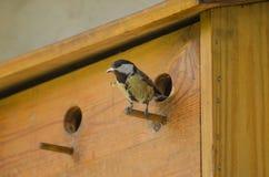 Vogelmeiseaufpassen, was geschieht Stockbild