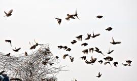 Vogelmenge lizenzfreies stockbild