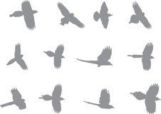 Vogelmenge silhouettieren Lizenzfreies Stockfoto