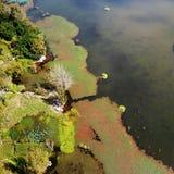 Vogelmening van Qionghai-Meer in Xichangï ¼ ŒChina Royalty-vrije Stock Afbeelding