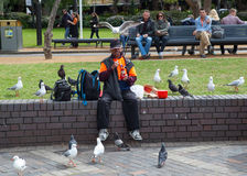 Vogelmens van Sydney Harbour Stock Foto