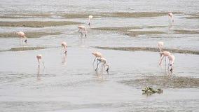 Vogelmigratie in klimaatverandering stock video