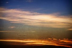 Vogelmigration Lizenzfreies Stockfoto