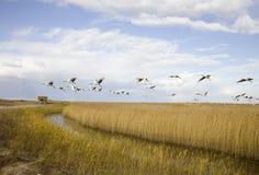 Vogelmigrieren lizenzfreies stockbild