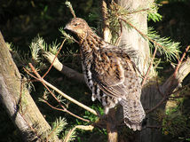 Vogelnahaufnahme, die Kamera betrachtet Lizenzfreies Stockfoto
