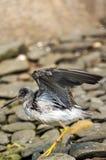Vogelnahaufnahme, welche die Flügel ausbreitet stockbild