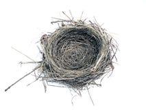 Vogelnest lizenzfreie stockfotos