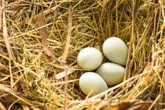 Vogelnest Stock Foto's