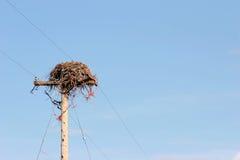Vogelnest auf Pol Lizenzfreie Stockfotografie