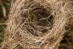 Vogelnest in der Natur Lizenzfreies Stockfoto