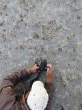 Vogelnest fotograferen; Photographing bird nest stock images