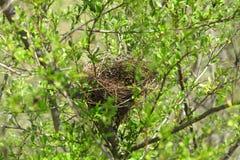 Vogelnest im Baum leer Stockfotos
