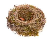 Vogelnest leer Lizenzfreies Stockfoto