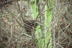 Vogelnest leer im Wald lizenzfreie stockfotos