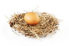 Vogelnest met een ei Royalty-vrije Stock Afbeeldingen
