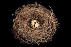 Vogelnest mit Eiern Lizenzfreies Stockfoto
