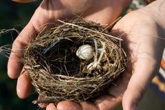 Vogelnest mit Eiern Lizenzfreie Stockfotos