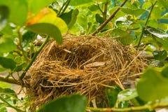 Vogelnest op boomtak Stock Afbeelding