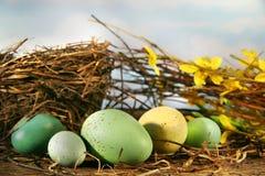Vogelnest und -eier Lizenzfreies Stockfoto