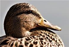 Vogelobservatie in het park stock afbeeldingen
