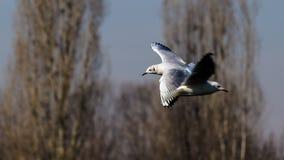 Vogelobservatie in het park stock foto's