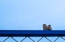 Vogelpaar Royalty-vrije Stock Foto's