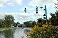 Vogelpark stockbilder