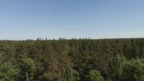 Vogelperspectief van mooi groen bos luchtschot Luchtmening 4K De camera vliegt omhoog voor het bos hierboven stock videobeelden