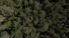 Vogelperspectief van mooi groen bos luchtschot Luchtmening 4K De camera ziet neer eruit stock video