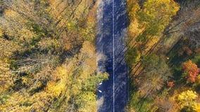 Vogelperspektive über dem Auto, das durch bunten Wald reist stock footage
