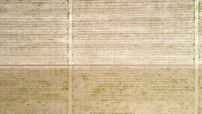 Vogelperspektive über dem Feld der Ernte, vorzeitig stockbilder