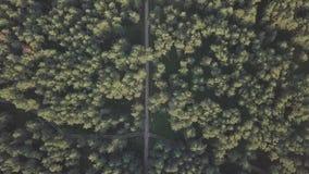 Vogelperspektive über grünem Wald am Abend ROHE GESAMTLÄNGE stock footage