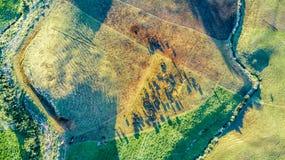Vogelperspektive auf einem Ackerland mit Koppeln auf Lager am Fuß des Bergs Taranaki Taranaki-Region, Neuseeland Lizenzfreies Stockfoto