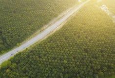 Vogelperspektive auf Plantage von Palmen Hintergrund, Draufsicht aer Stockfoto