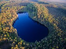 Vogelperspektive auf Waldsee Lizenzfreie Stockbilder