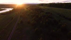 Vogelperspektive-Bäume, die zwischen See und Wald wachsen stock footage
