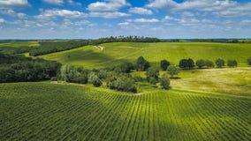 Vogelperspektive-Bordeaux-Weinberg im Sommer, Entre-deux mers stockfotografie