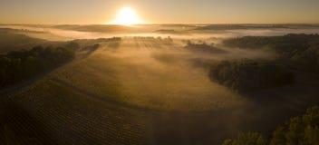 Vogelperspektive-, Bordeauxweinberg, Landschaftsweinberg und Nebel bei Sonnenaufgang lizenzfreie stockbilder