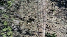 Vogelperspektive der Abholzung des Waldes nach Hurrikan stock footage