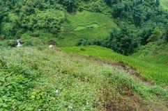 Vogelperspektive der asiatischen Landschaft mit Reisterrassen und -fluß Lizenzfreie Stockfotografie