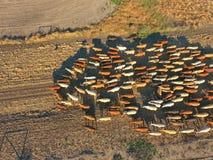 Vogelperspektive der Hinterland-Viehversammlung Stockfotografie