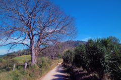 Vogelperspektive der ländlichen Szene mit trockenem Baum und blauem Himmel großer Kontrast lizenzfreie stockfotos
