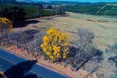 Vogelperspektive der Landstraße mit einem farbigen und trockenen Baum stockfoto