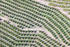 Vogelperspektive der orange Waldung in Ventura County, Ojai, Kalifornien Stockfotografie